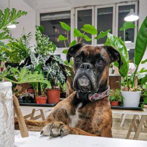 rośliny-bezpieczne-dla-zwierząt
